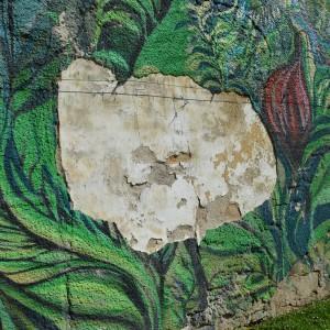 Foto mural O carballo, 9 de 17