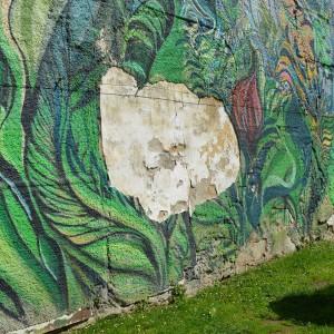 Foto mural O carballo, 17 de 17