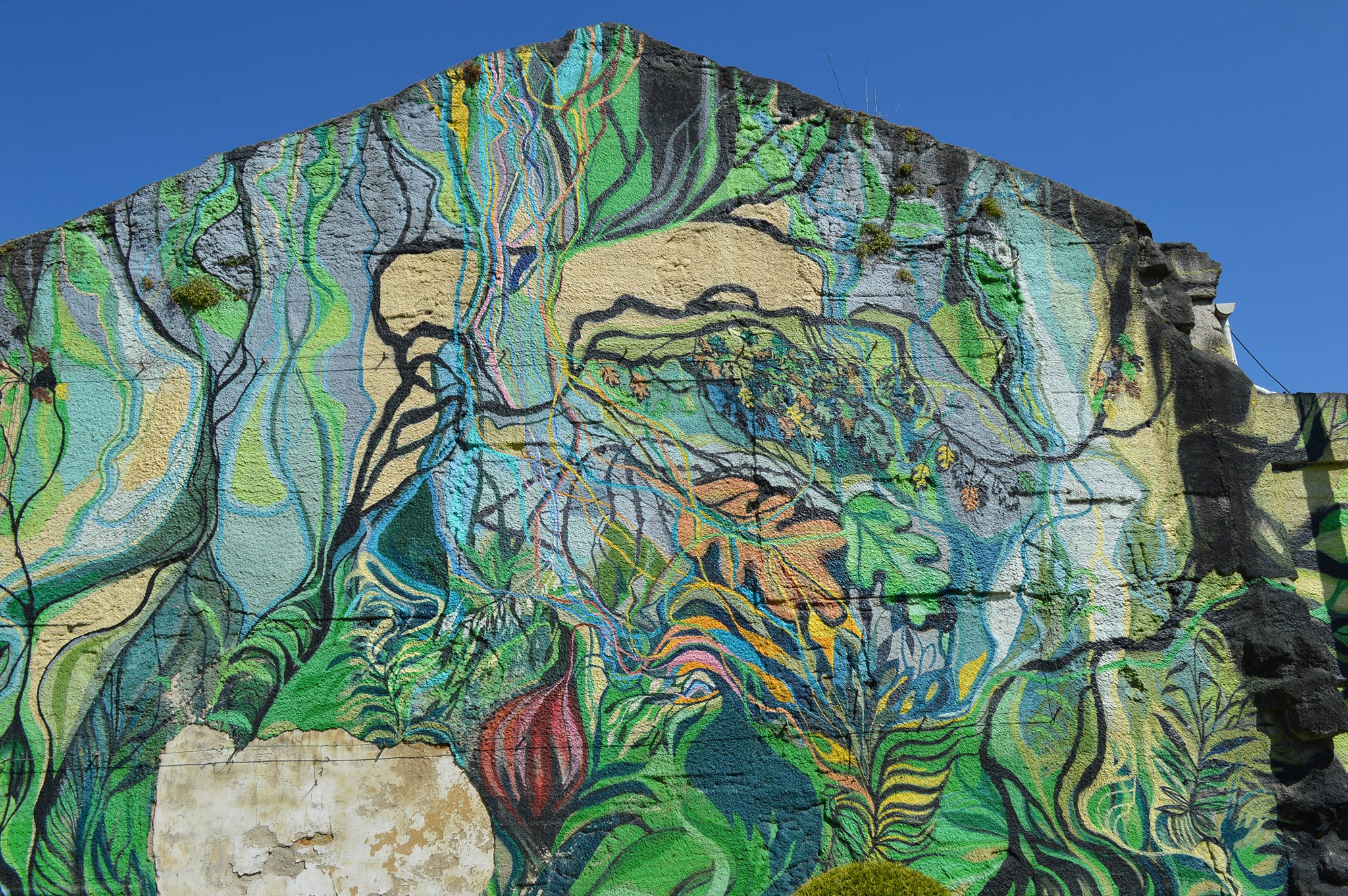Foto principal mural O carballo